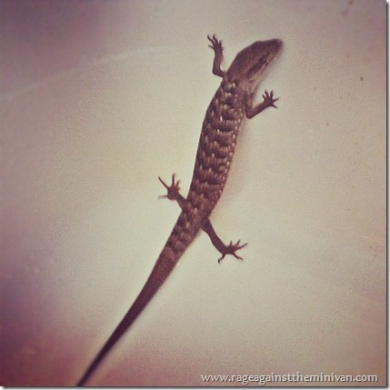 Lizard In My Backyard if you love someone, set them free (a tale of three lizards) - rage